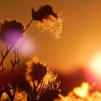 Солнце на закате! :: Максим Есменов