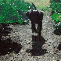 Сквозь капусту :: Света Кондрашова