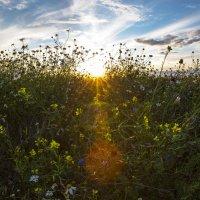Закат на поле :: Андрей Качин