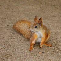 Орехи давай... сколько можно танцевать...) :: tipchik
