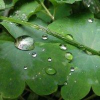 после дождя :: Дмитрий Брошко