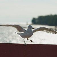 таней лебедей :: Валерий