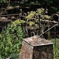 Трава скрывает имена и даты :: Ирина Данилова