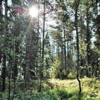 Селигерский лес 2 :: Viacheslav