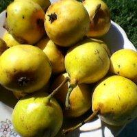 фрукты :: Миша Любчик