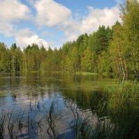 Лесное озеро. :: ТАТЬЯНА (tatik)
