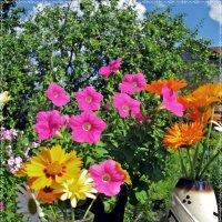 Краски уходящего лета... :: ТАТЬЯНА (tatik)