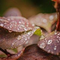 Дождик :: Владимир Самсонов