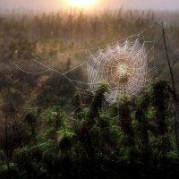 На рассвете последнего месяца лета... :: Андрей Войцехов
