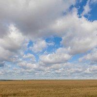 Русское поле :: Евгений Мельников