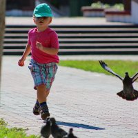 ...летите,голуби! :: Александр Липецкий