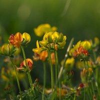 Цветочки :: татьяна соловьёва