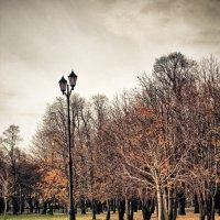 Fall returns :: Роман Кинаш