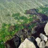 Водоросли, камни, морская вода... :: Нина Корешкова