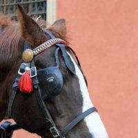 голова лошади :: Olga