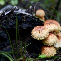 В лесу :: Дмитрий Кошелев