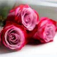 Розы :: AllaSaa