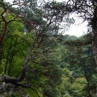 Сосны в горах :: Денис Мартьянов
