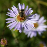 Пчёлка :: MEXAHNK НИКОНОВ