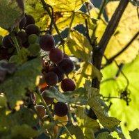Осенние краски.. :: ФотоЛюбка *