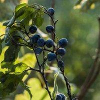 Осенние краски* :: ФотоЛюбка *