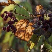 Осенние краски** :: ФотоЛюбка *