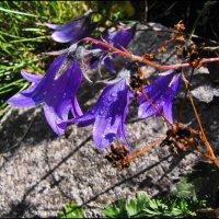И на камнях растут цветы. :: Ирина Нафаня