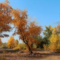 Осенние краски :: Dr. Olver  ( ОлегЪ )