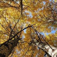 Осенние сени #5 :: Виктор Четошников