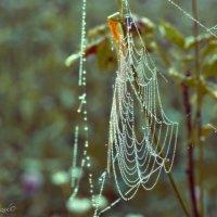 Капельки росинки с утра на паутинке.... :: Елена Kазак
