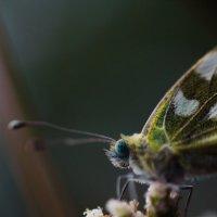осенняя бабочка :: Татьяна Киселева