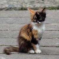 Кошечка, приносящая счастье :: Ирина Приходько