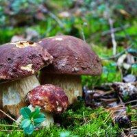 В лесу :: Вячеслав Исаков