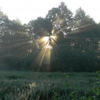 Утро на болоте :: Олег Романенко