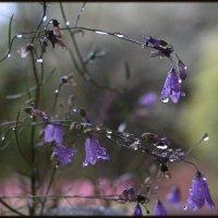 Серебряный перезвон дождя :: veilins veilins