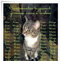 Возраст кошки :: muh5257