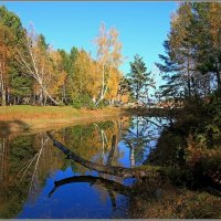 озеро Лесное. :: Николай Елисеев