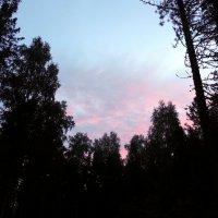 Там, за лесом, солнце встало и зарделись облака!!! :: Наталья Пендюк Пендюк
