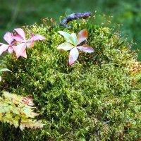 Лесные цветы :: Валерий Талашов