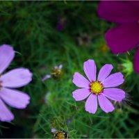Цветы уходящего лета :: Дмитрий Арно