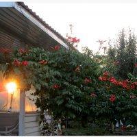 Утром заглянуло солнце в гости... :: Тамара (st.tamara)