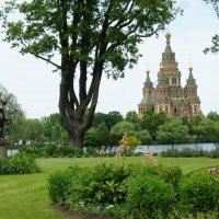 Из романтического сада Ольгина острова вид на собор Петра и Павла тоже душевный :: Елена Павлова (Смолова)