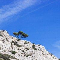 Одинокое дерево :: Anna Lubina