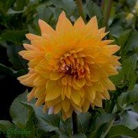 Цветы :: Evgenij Schleinikov