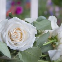 С пожеланием доброго утра!... :: Bosanat