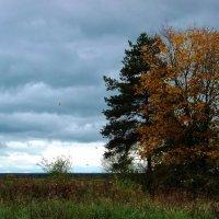 Осень. :: MEXAHNK НИКОНОВ