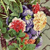 Осенние цветы :: Александр Облещенко
