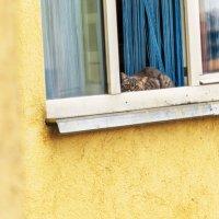 Из соседского окошка за мной следила ФСБ-кошка :: Светлана Овчинникова