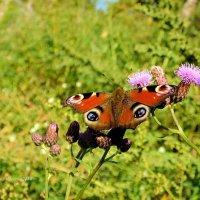 Последняя бабочка :: Дмитрий Ерохин