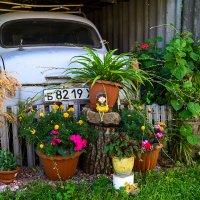 Раритет в ландшафном дизайне. :: Екатерина Шалдуга